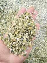 陕西绿色洗米石永顺绿色地坪骨料供应图片