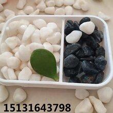 山东全省批发白色豆石永顺白色水洗石报价图片