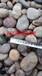 東營天然混色鵝卵石永順鋪路礫石批發
