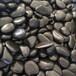 內蒙古白色鵝卵石永順雨花石大量供應