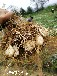 食用百合種植栽培環境要求