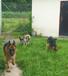 精灵骨宠物乐园重庆宠物寄养训练有专属大草坪