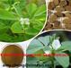 葫芦巴提取物、葫芦巴碱1%-2%;L-4-羟基异亮氨酸10%-20%