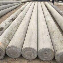 埃塞俄比亚15kv线路300等径预应力水泥电杆图片