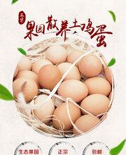 惠州汇农散养胡须鸡初生蛋孕妇月子蛋