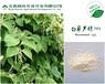 精品白藜芦醇98%抗氧化防衰老原料纯天然虎杖提取高纯
