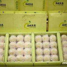 蒲城酥梨博物馆早酥梨价格代办电话图片