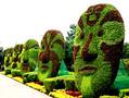 立体花坛脸谱五色草造型菊花造型绢花造型绿雕水泥雕塑图片