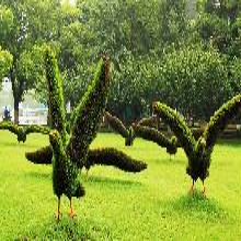 动植物造型海鸥五色草造型绢花造型绿雕