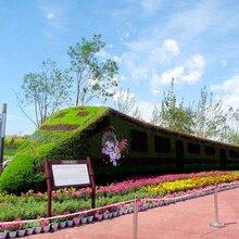 五色草造型火车立体花坛绿雕动植物造型植物雕塑