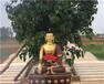 佛门圣树什么是菩提树