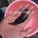 出售博白陆川北流玉州玉林黑鲩鱼苗,生鱼苗(黑鱼苗)白鲳鱼苗批发价格