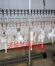 鹅屠宰流水线设备厂家直销定制图片