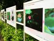 深圳户内写真喷绘广告促销物料KT板,画板,雪弗板图片
