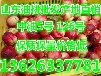 长治温室大棚油桃批发市场价格