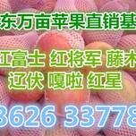 山西晋城嘎啦苹果供应价格讯息河北红将军苹果价格查询图片