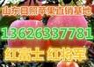 烟台栖霞冷库红富士苹果种植基地批发