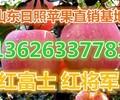 甘肃冷库纸袋苹果出售批发价格