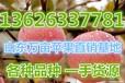 山东苹果最大的批发地用带山东苹果批发基地