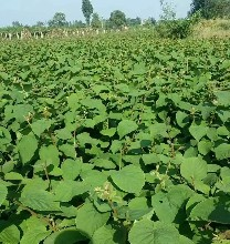 农业经纪人网_农村创业致富项目,中国农综网农业经纪人加盟图片
