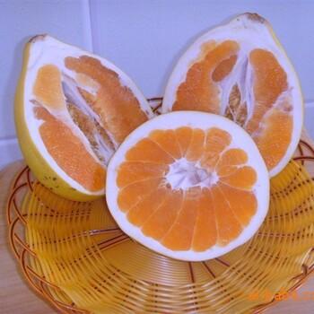 广西三红柚子种