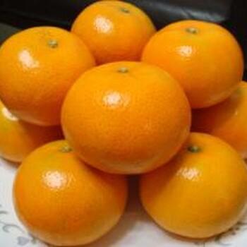 红肉蜜柚苗