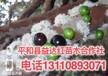 福建省莆田市益达合作社2公分嘉宝果树有卖2公分嘉宝果树价格低