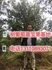 襄阳市嘉宝果种植条件批发市场