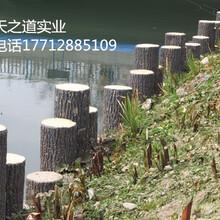 河道仿木桩混凝土仿木桩供应