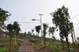 LED太阳能路灯嘉峪关销售飞鸟厂家提供