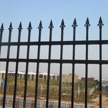 专业生产锌钢护栏--厂区围墙护栏-锌钢草坪护栏--道路护栏-球场围栏