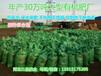 石家庄生物有机肥鸡粪肥料价格