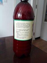 衡水生物菌剂厂家(液体喷施)15瓶一箱现货现发图片