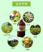 西瓜想要防腐根选品值液体生根菌剂含量50亿生根养根图片