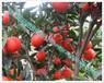 高鉀型水溶肥瓜果類膨大果實促進著色增加甜度三品肥業廠家直銷