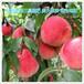 促进着色增加甜度叶面肥氮磷钾大量元素水溶肥瓜果类膨大果实