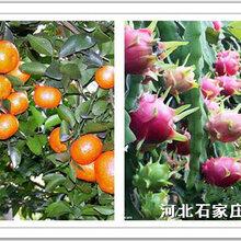 三品-高鉀型大量元素水溶肥-促進花芽分化提高果實質量-有機肥廠家價格批發滴灌沖施肥圖片