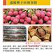 苏州高温热泵荔枝烘干应用项目