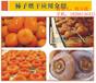 苏州高温热泵柿饼烘干项目