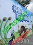 上海神兽矮脚马租赁浙江神兽矮脚马出租江苏租赁神兽矮脚马租神兽矮脚马特价神兽矮脚马租借实惠图片