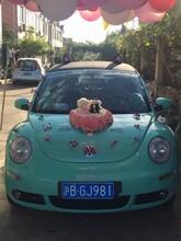 上海出租甲壳虫做活动、浙江出租甲壳虫拍电影、江苏出租甲壳虫拍广告、出租甲壳虫拍摄图片