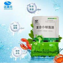 复合小球藻源-补充藻源、均衡藻相、调节水色,小球藻、卵囊藻、硅藻图片