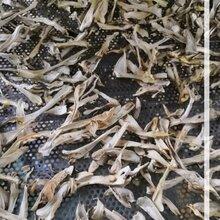 烘干房制造厂家空气能烘干房食用菌烘干房香菇烘干房图片