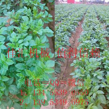 佳匯種植高手土豆種植覆膜一體機土豆點播機的效果土豆播種機生產廠家