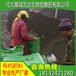 谁知道厦门发酵鸡粪怎么卖福建集美干鸡粪批发多少钱一吨?
