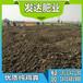 求解:安徽滁州有卖干鸡粪的吗?滁州鸡粪批发市场在哪个位置?