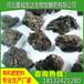 黑龙江农户想知道从哪里能买到纯鸡粪?膨化鸡粪批发什么价格?