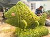 衡水五色草造型制作