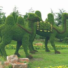 动植物雕塑之骆驼造型