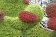 五色草小鸟造型